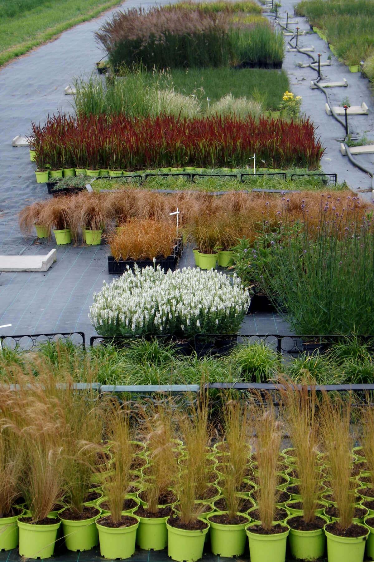Variétés de plantes de la pépinière