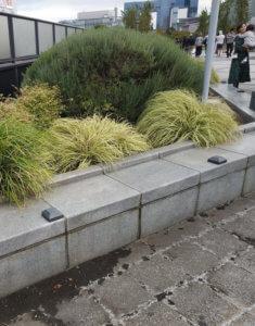 Carex Evergold Japon