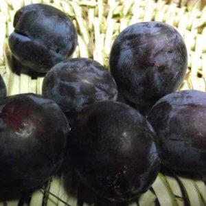 Prunier madeleine